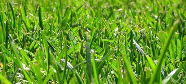 green grass - installing new sod