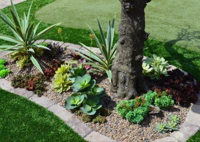 bobbys succ gardens 002