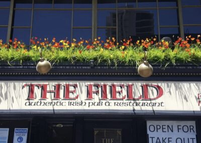 The Field 3
