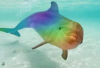 Dolphins Heal with Sonar