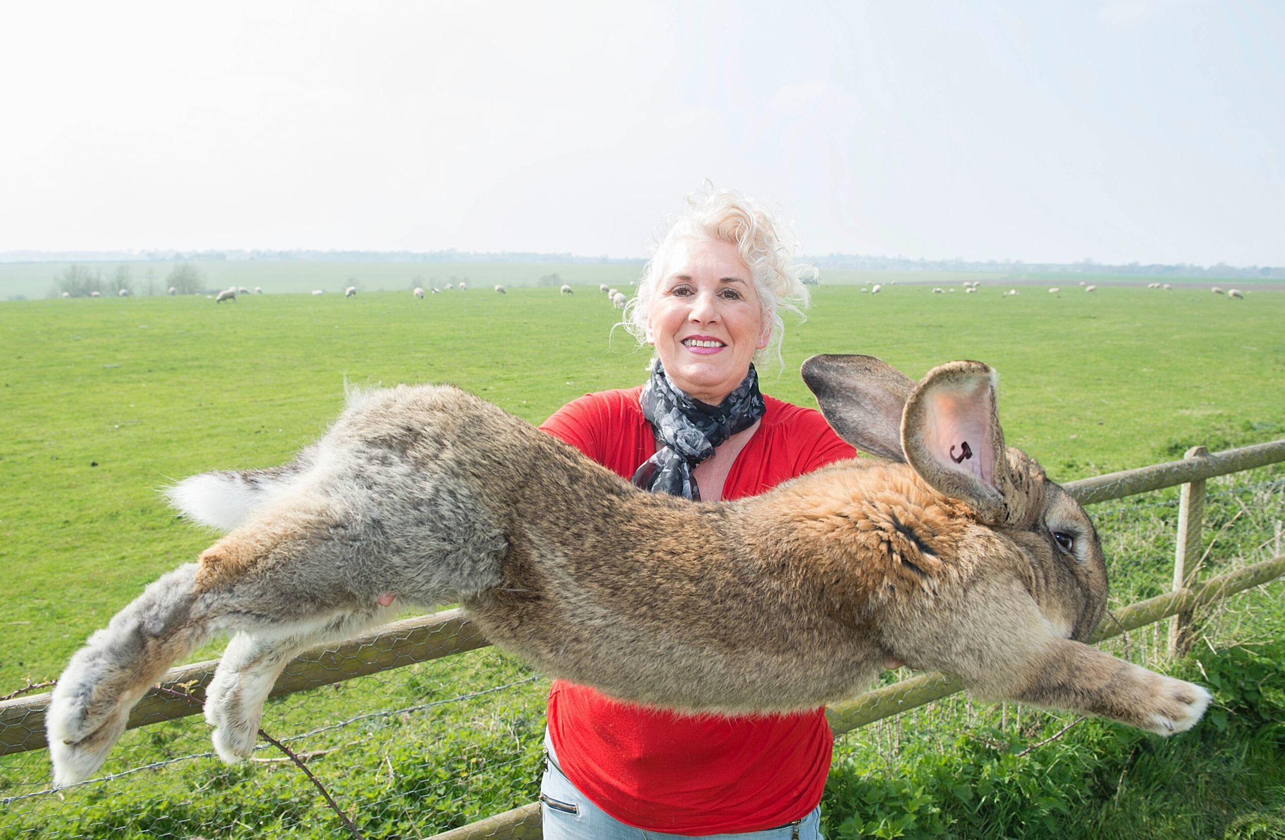 A Giant Rabbit Has Been Stolen in the UK!