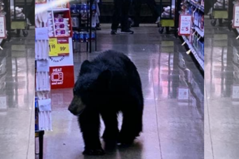 LA Shoppers Are Surprised by a Bear in a Local Super Market