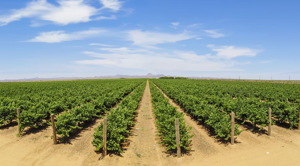 lescombes family vineyard in new mexico between deming and lordsburg