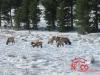 elk_snow_nocolifestyle
