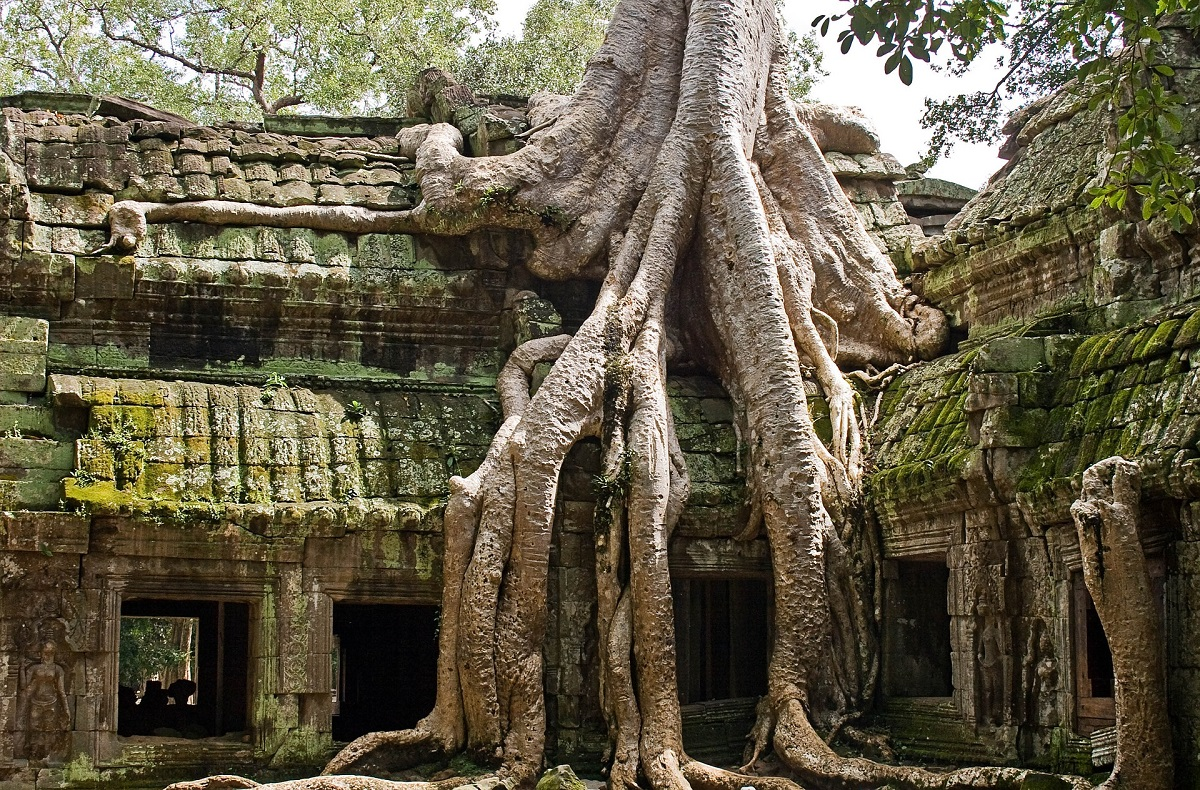 Parts of Ta Prohm have merged with the forest trees.