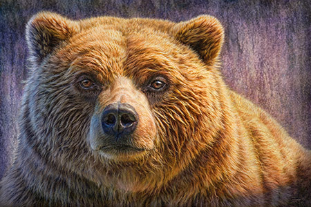 Grizzly Portrait Preview
