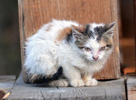 One Stray Kitten