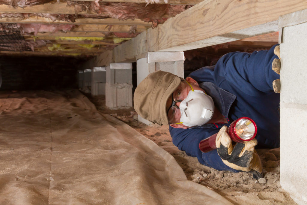 Inspecting for mold in a crawl space