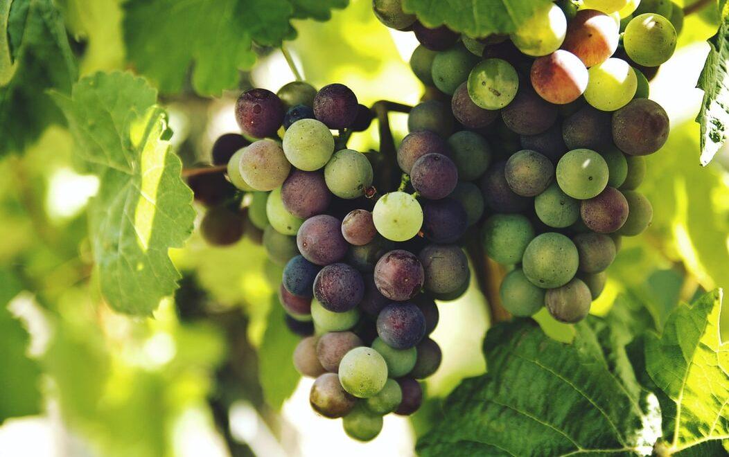 Cobblestone Winery & Granite Hill Event Venue