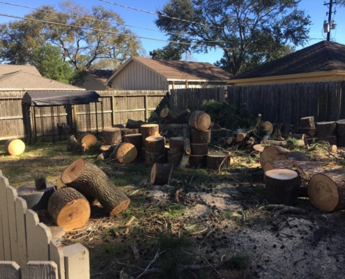 cutting tree removal