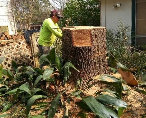 stump grinding process