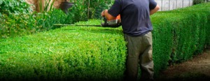 shrub and hedge services