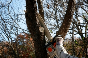 Tree Removal Services in Cypress, TX