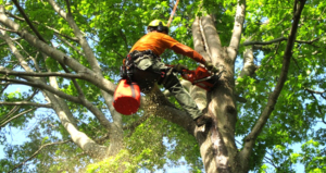 Spring TX tree trimming services