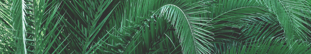 Palm tree banner - Landscaping and tree care
