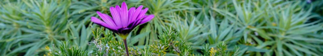 Purple flower banner - Landscape design