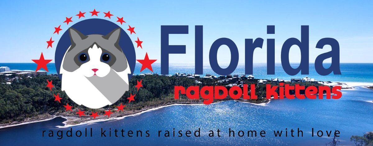 Florida Ragdoll Kittens