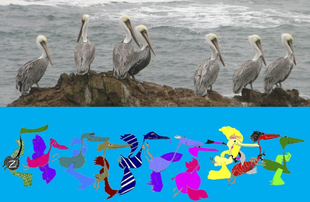 Pelican Family Series Childrens Book Characters and Real Pelicans Why Write A Children's Book Image