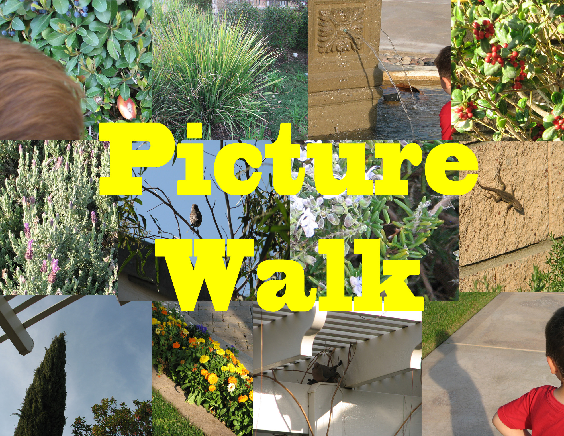 Pelican Family Series Using a picture walk for child development