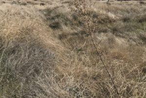 desert habitat