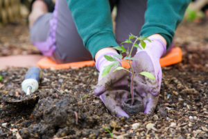 Planting Day at the Castle @ Bayside Historical Society | New York | United States