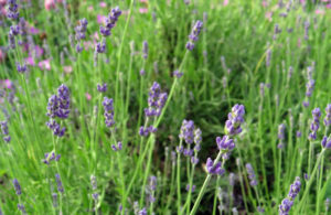 Simplifying Herbs For Your Daily Life @ Queens County Farm Museum | New York | United States