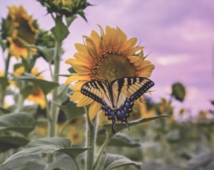 Parks for Pollinators BioBlitz & Planting @ Meadow Lake Bird Blind | New York | United States