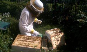 Honey Harvest Festival @ Voelker Orth Museum