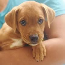 Queens Beer Fest - Bideawee Pet Adoption Van on October 5th