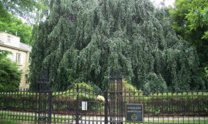 Summer History Series: From Archaeology to Lawn Games! @ Weeping Beech Park | New York | United States
