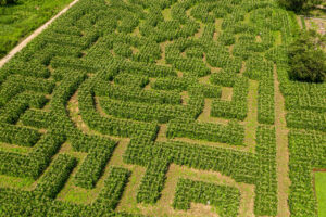 The Amazing Maize Maze @ Queens County Farm Museum | New York | United States