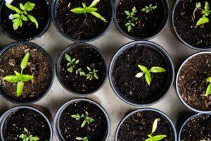 Kitchen Gardening with Queens Botanical Garden - ONLINE @ Alley Pond Environmental Center   New York   United States
