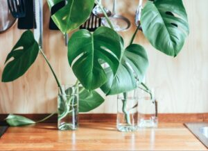 Houseplants 101- Virtual Cafe - ON LINE @ Alley Pond Environmental Center | New York | United States