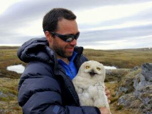 """Snowy Owls"" - a Queens County Bird Club presentation @ Online via Zoom"