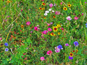 WIldflowers Throughout the Seasons - VIRTUAL @ Alley Pond Environmental Center | New York | United States