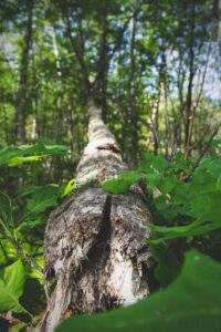 Welcome Summer Forest Bathing Experience @ Alley Pond Environmental Center | New York | United States