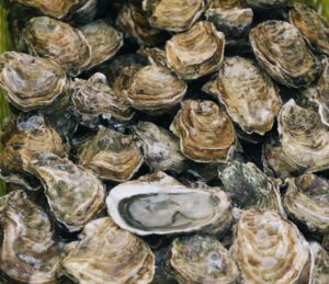 The History of NYC and Oysters with author Thomas Hynes - Virtual Presentation @ Alley Pond Environmental Center | New York | United States