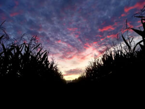 Maze by Moonlight @ Queens County Farm Museum | New York | United States