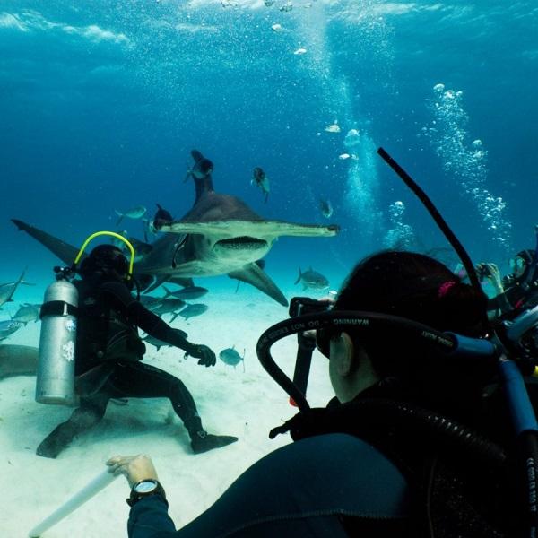SCUBA Network SCUBA diving Hammerhead Shark Bahamas