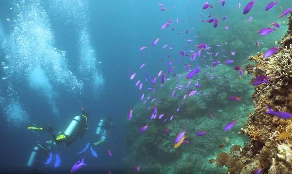 SCUBA Network diving trips