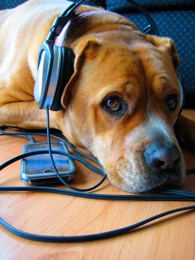 Rosie wearing headphones