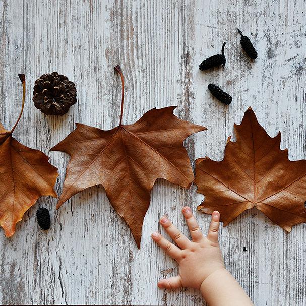 Fallen leaves, baby hand