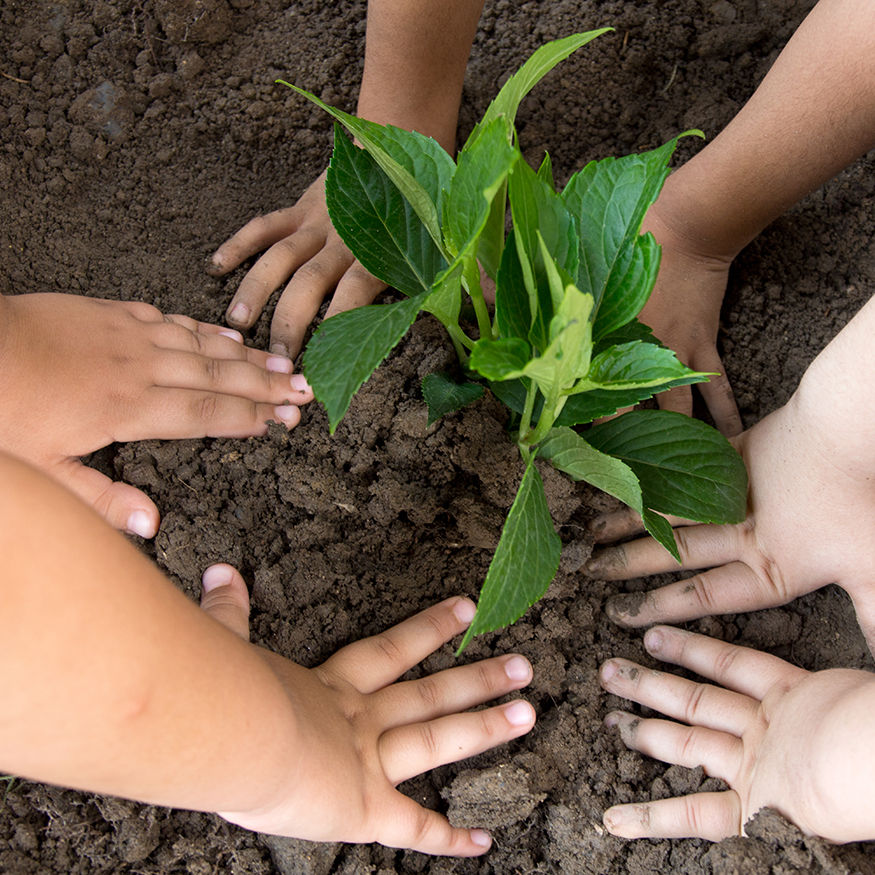 Girls planted a sapling