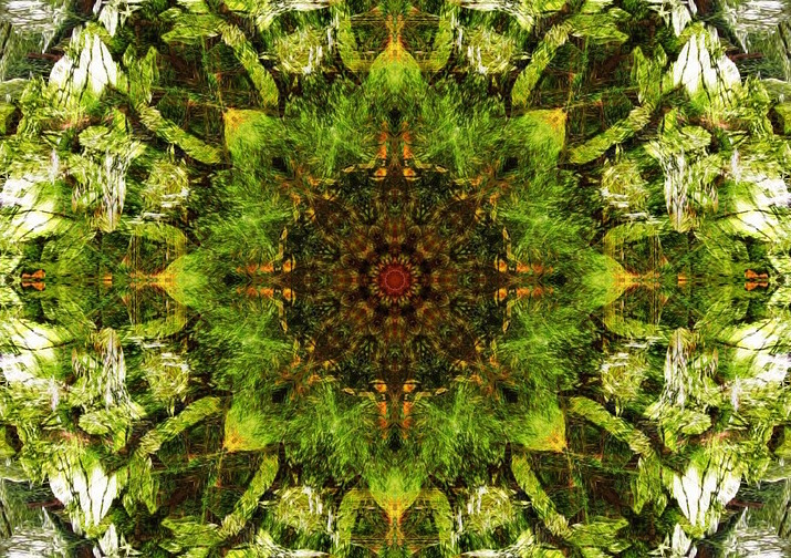 green flower mandala image