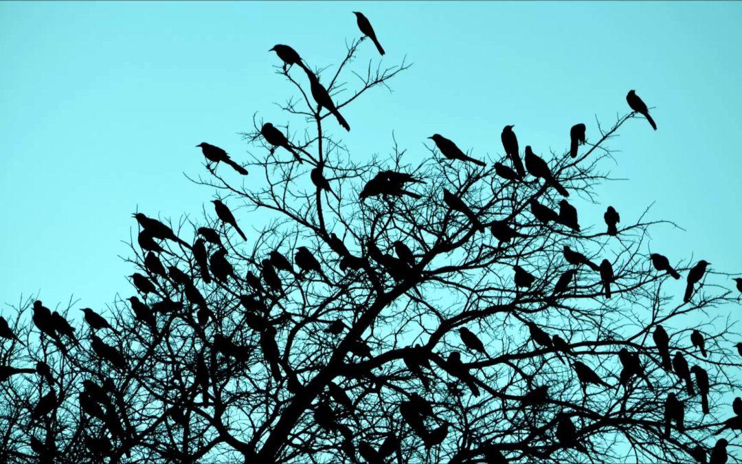 """""""morning birds in a tree"""""""