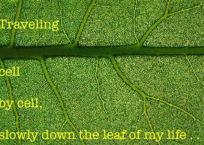 traveling down the leaf of my life image