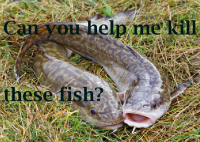 kill fish image