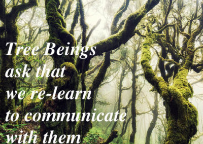 tree beings ask that we learn to communicate