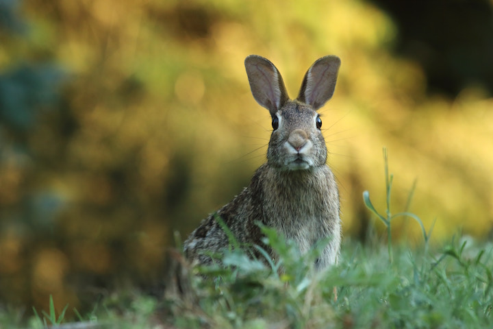 bunny popping up in the woods