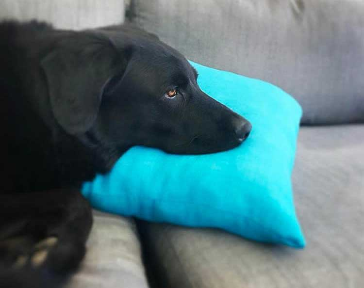 Buoy on blue pillow